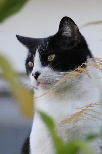 Serial Kitty