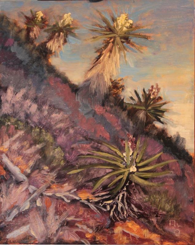 Evening Yuccas