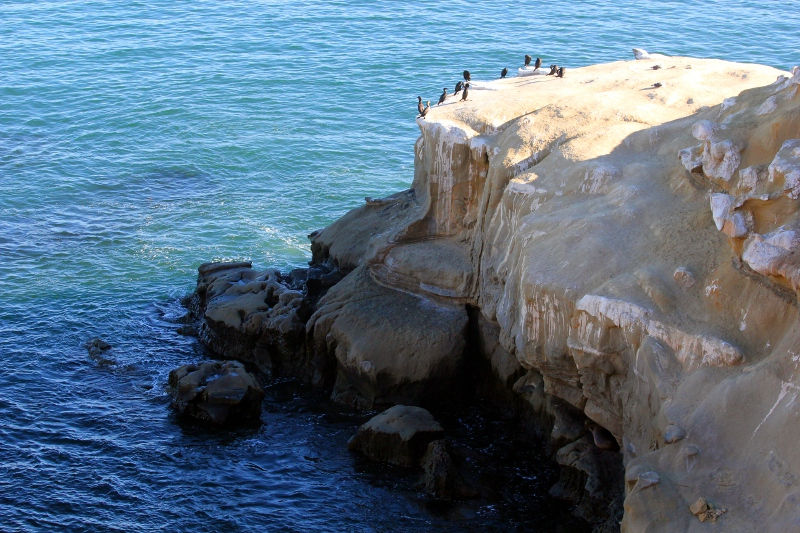 Above the Roost at La Jolla Cliffs.